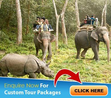 Binsar Tour Packages
